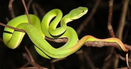 Gặp rắn gì nên đánh con gì?