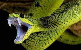 Gặp rắn đánh con gì?